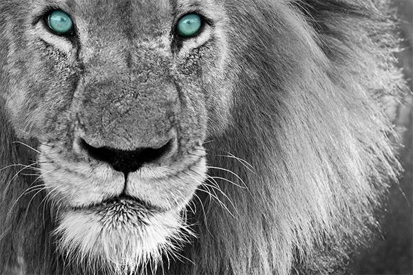 planejamento tributário - um leão, símbolo normalmente ligado ao imposto de renda