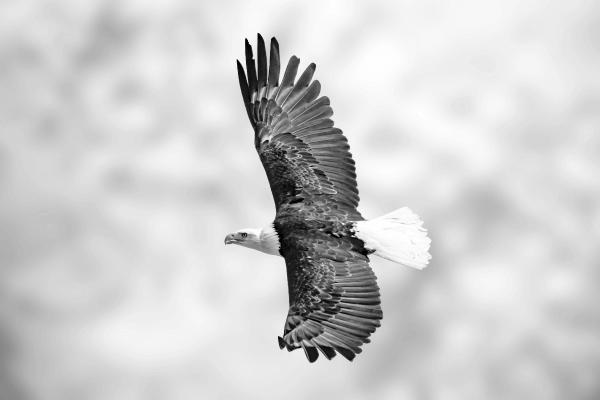 Family Office - uma águia voando para representar o crescimento de renda que você vai ter ao realizar tal ação