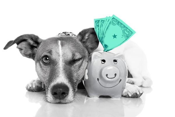 reserva de emergência sendo representada por um cachorro vigiando um cofrinho em forma de porco com algumas notas de dólar